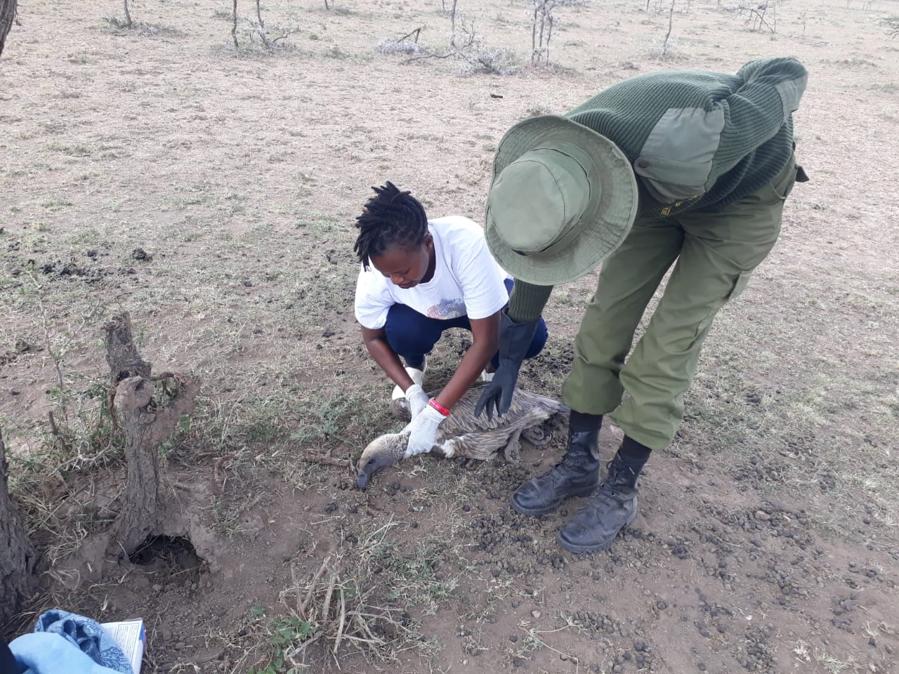 Valerie Nasoita and a ranger work to provide care to a sick vulture