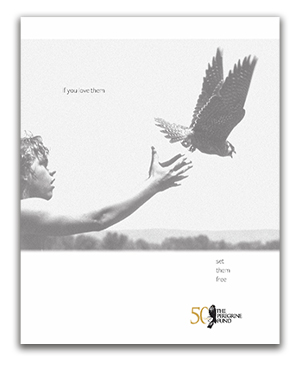 young man releasing peregrine on cover of the 50 year commemorative report