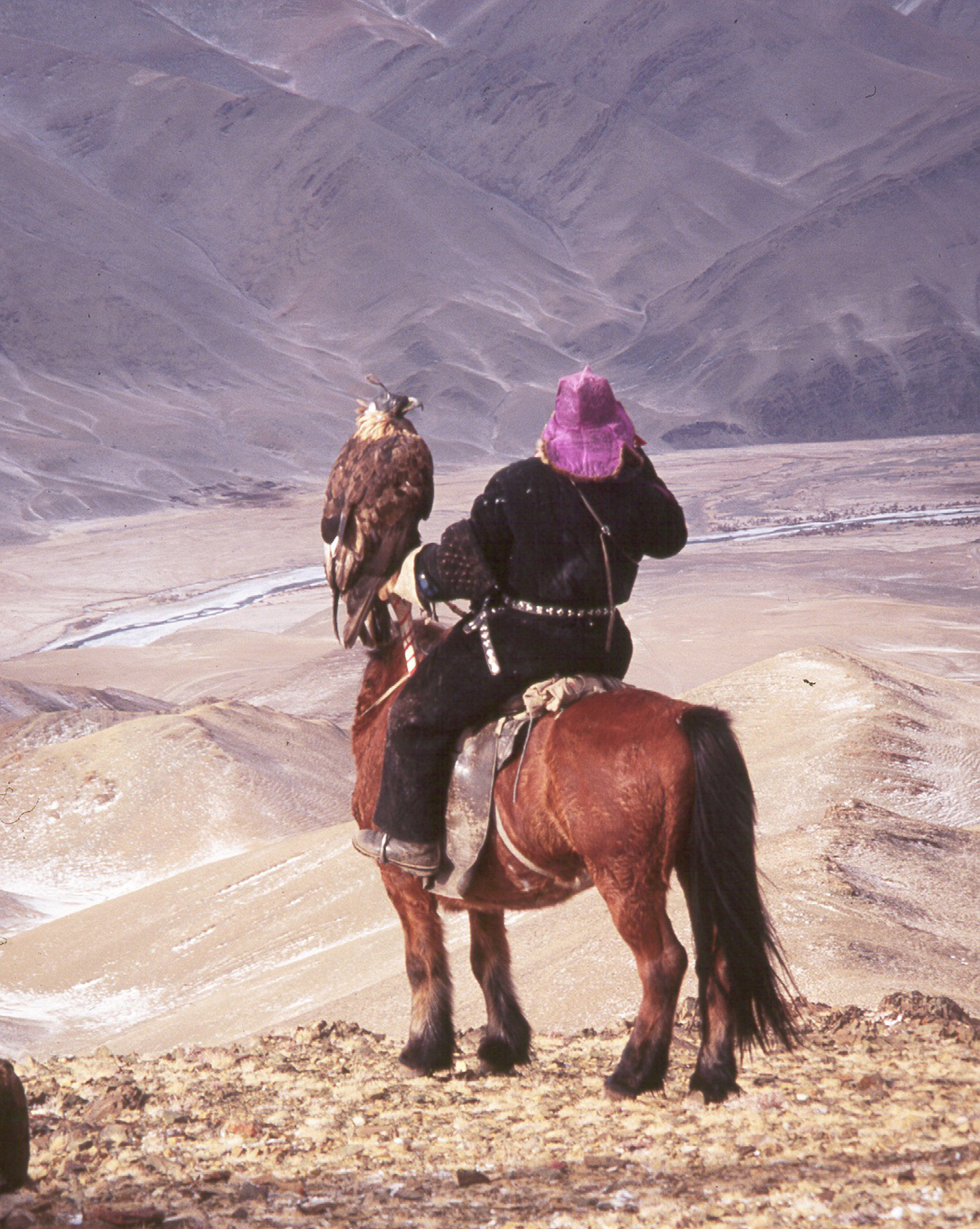 A Mongolian falconer on horseback surveys the landscape with a Golden Eagle perched on his arm
