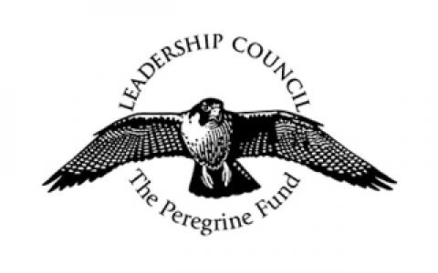 logo with Peregrine Falcon in flight