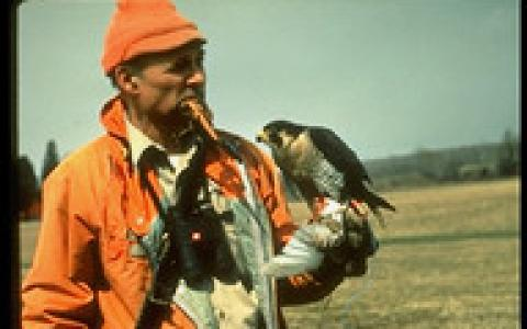 Peregrine Fund Founder Tom Cade holds a Peregrine Falcon