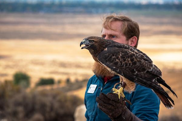 Meet Our Birds The Peregrine Fund