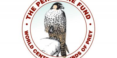 logo of The Peregrine Fund's World Center for Birds of Prey