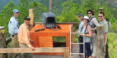 Biologists prepare to release captive-bred falcons from a hack tower in Belize