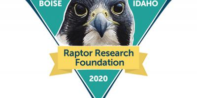 logo with Peregrine portrait